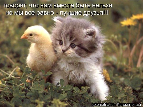 Котоматрица: говорят, что нам вместе быть нельзя  но мы все равно - лучшие друзья!!!