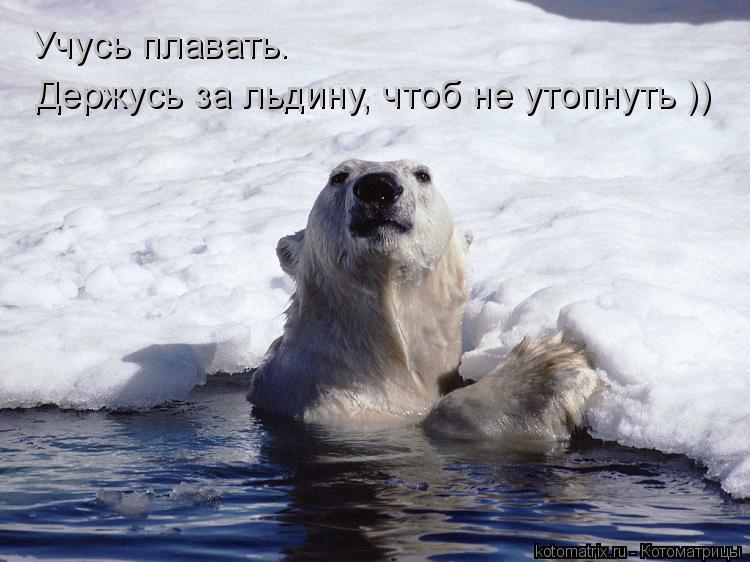 Котоматрица: Учусь плавать.  Держусь за льдину, чтоб не утопнуть ))
