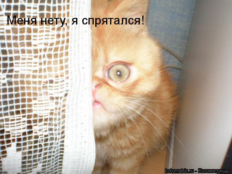 Котоматрица: Меня нету, я спрятался!