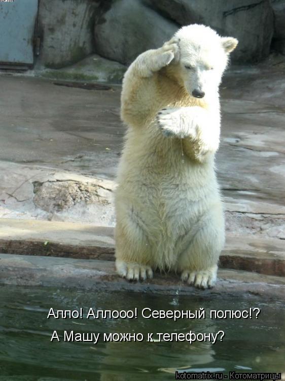Котоматрица: Алло! Аллооо! Северный полюс!? А Машу можно к телефону?