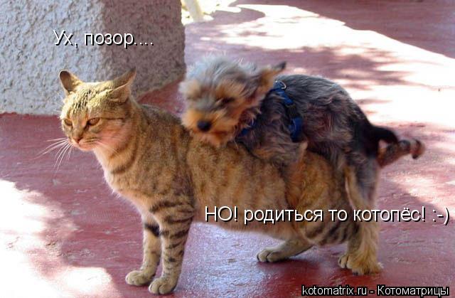 Котоматрица: Ух, позор.... НО! родиться то котопёс! :-)