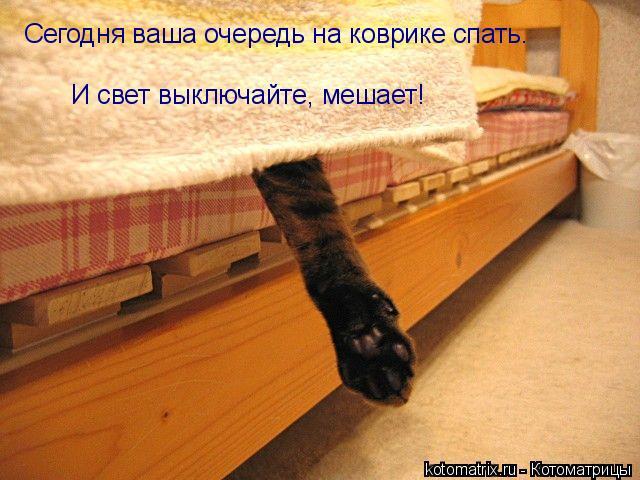 Котоматрица: Сегодня ваша очередь на коврике спать. И свет выключайте, мешает!