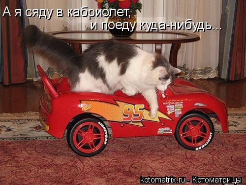 Котоматрица: А я сяду в кабриолет, и поеду куда-нибудь...
