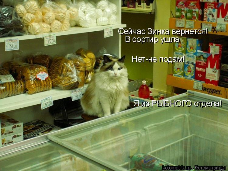 Котоматрица: Сейчас Зинка вернется! Нет-не подам! В сортир ушла Я из РЫБНОГО отдела!