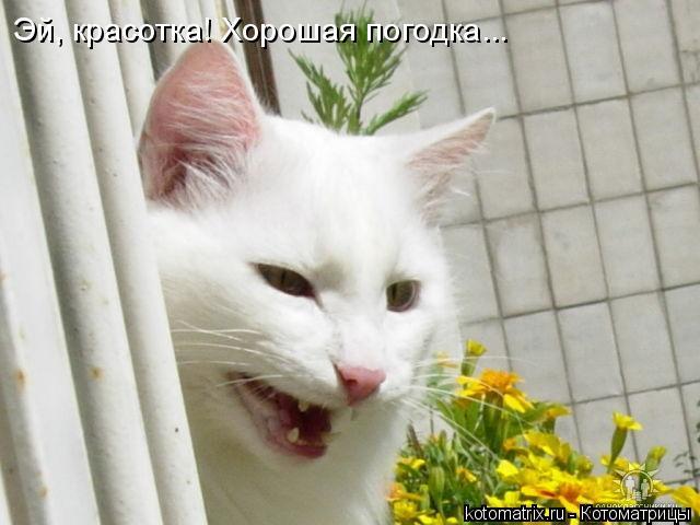 Котоматрица: Эй, красотка! Хорошая погодка...