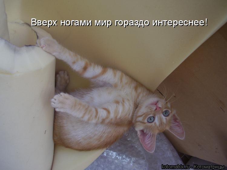 Котоматрица: Вверх ногами мир гораздо интереснее!
