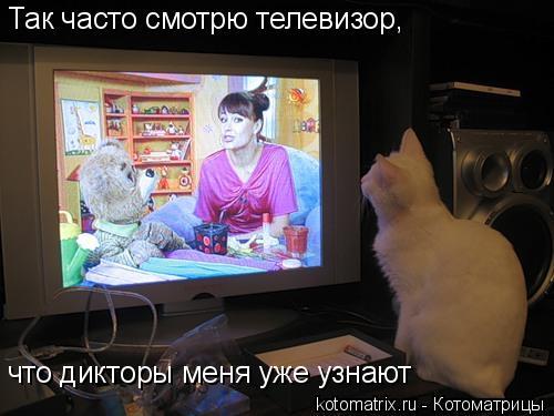 Котоматрица: Так часто смотрю телевизор,  что дикторы меня уже узнают