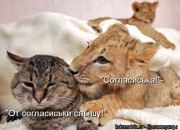 """Котоматрица: """"Согласиська!""""- """"От согласиськи слышу!"""""""