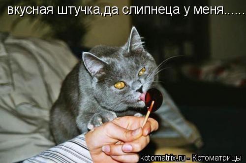 Котоматрица: вкусная штучка,да слипнеца у меня.........