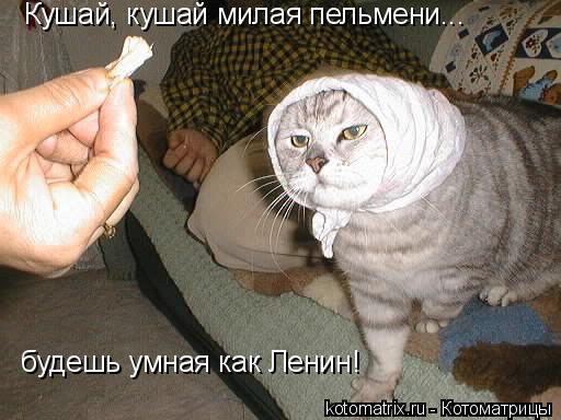 Котоматрица: Кушай, кушай милая пельмени... будешь умная как Ленин!