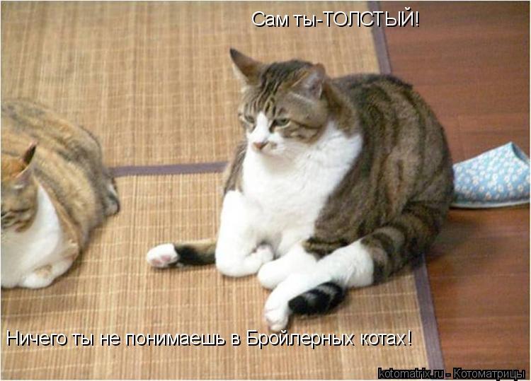 Котоматрица: Сам ты-ТОЛСТЫЙ! Ничего ты не понимаешь в Бройлерных котах!