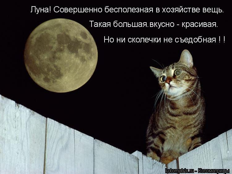 Котоматрица: Луна! Совершенно бесполезная в хозяйстве вещь. Такая большая.вкусно - красивая. Но ни сколечки не съедобная ! !