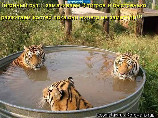 Котоматрица: Тигриный суп... замачиваем 3 тигров и быстренько разжигаем костер пока они ничего не заметили!!!