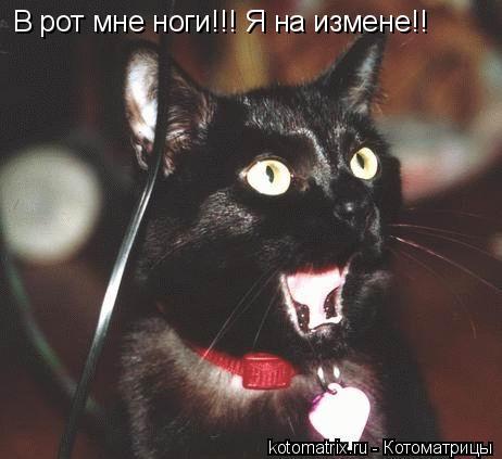 Котоматрица: В рот мне ноги!!! Я на измене!!