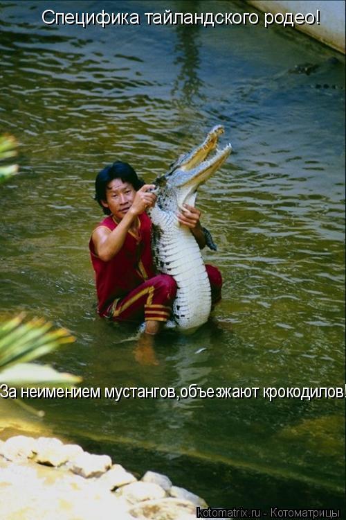 Котоматрица: Специфика тайландского родео! За неимением мустангов,объезжают крокодилов!