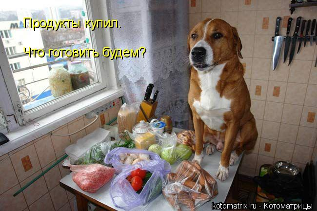 Котоматрица: Продукты купил. Что готовить будем?