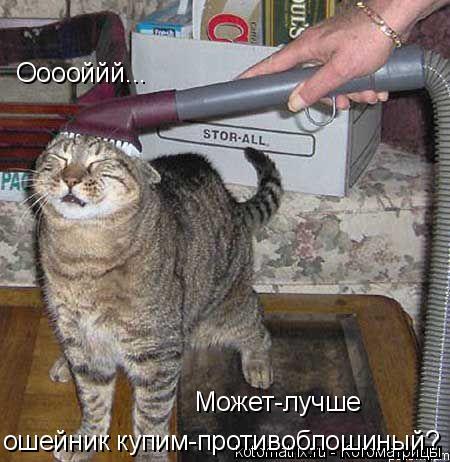Котоматрица: Может-лучше  ошейник купим-противоблошиный? Ооооййй...
