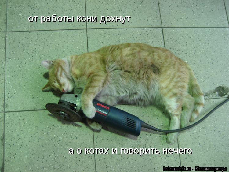 Котоматрица: от работы кони дохнут а о котах и говорить нечего