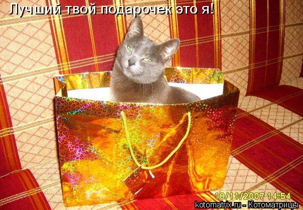 Котоматрица: Лучший твой подарочек это я!