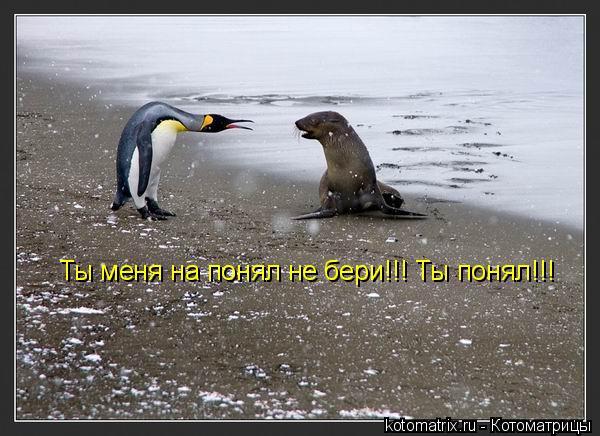 Котоматрица: Ты меня на понял не бери!!! Ты понял!!!