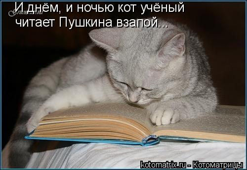 Котоматрица: И днём, и ночью кот учёный читает Пушкина взапой...