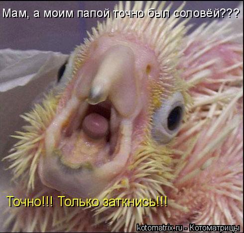 Котоматрица: Мам, а моим папой точно был соловёй??? Точно!!! Только заткнись!!!