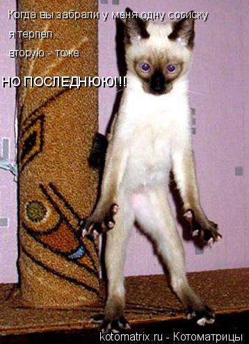Котоматрица: Когда вы забрали у меня одну сосиску я терпел... вторую - тоже... НО ПОСЛЕДНЮЮ!!!