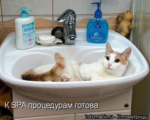 Котоматрица: К SPA процедурам готова
