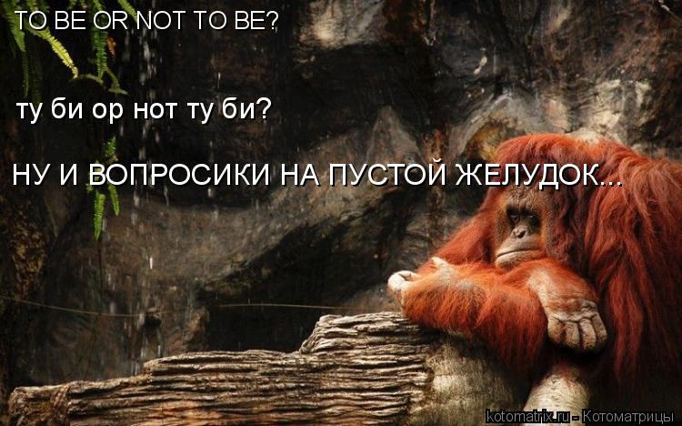 Котоматрица: TO BE OR NOT TO BE? ту би ор нот ту би?  НУ И ВОПРОСИКИ НА ПУСТОЙ ЖЕЛУДОК...