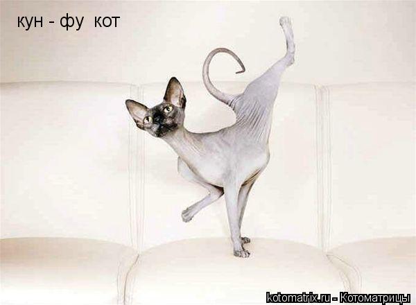 Котоматрица: кун - фу  кот