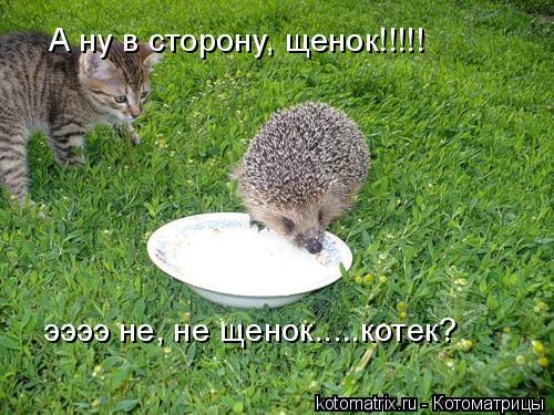 Котоматрица: А ну в сторону, щенок!!!!! ээээ не, не щенок.....котек?