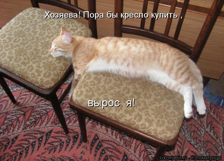 Котоматрица: Хозяева! Пора бы кресло купить , вырос  я!