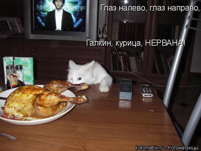 Котоматрица: Глаз налево, глаз направо, Галкин, курица, НЕРВАНА!