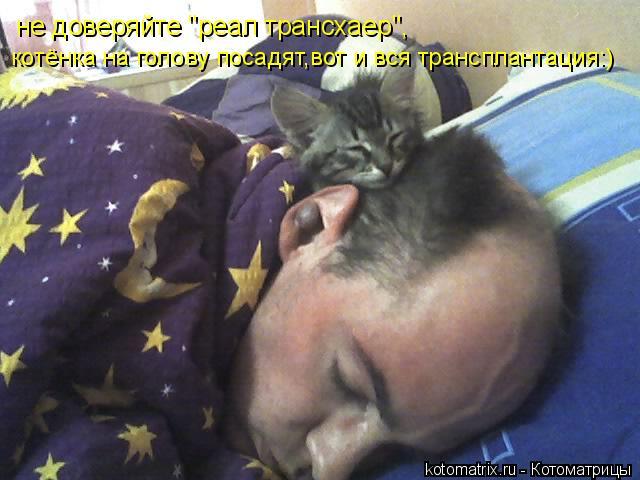 """Котоматрица: не доверяйте """"реал трансхаер"""", котёнка на голову посадят,вот и вся трансплантация:)"""