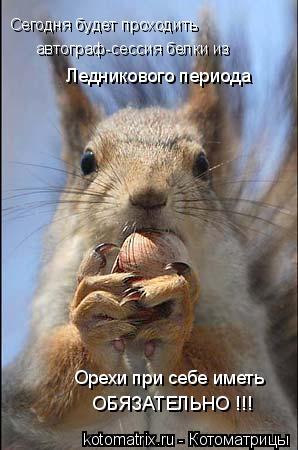 Котоматрица: Сегодня будет проходить автограф-сессия белки из Ледникового периода Орехи при себе иметь ОБЯЗАТЕЛЬНО !!!