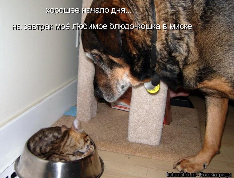Котоматрица: на завтрак моё любимое блюдо-кошка в миске хорошее начало дня...