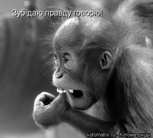 Котоматрица: Зуб даю,правду говорю!