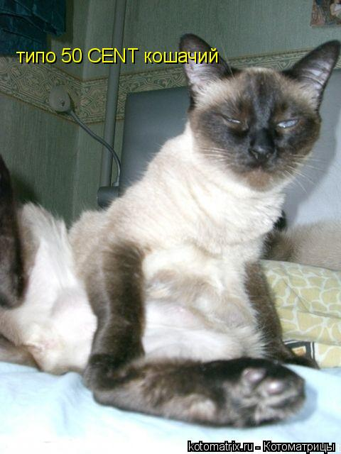 Котоматрица: типо 50 CENT кошачий