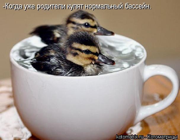 Котоматрица: -Когда уже родители купят нормальный бассейн.