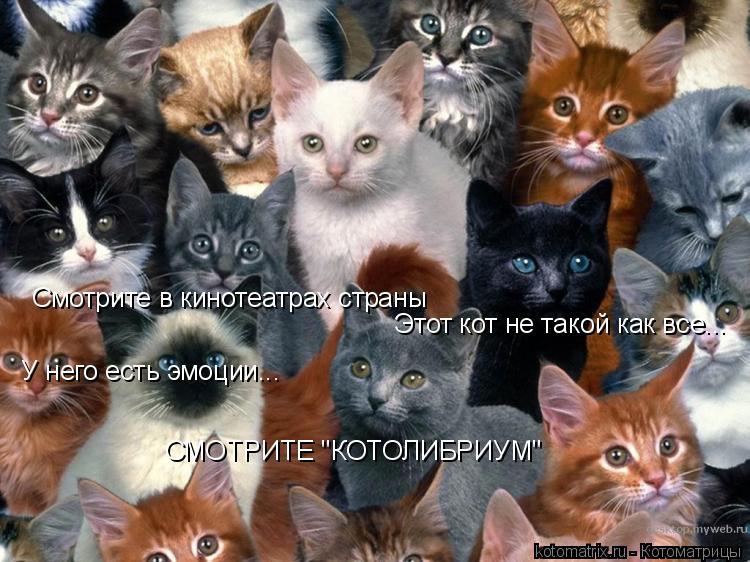 """Котоматрица: Смотрите в кинотеатрах страны Этот кот не такой как все... У него есть эмоции... СМОТРИТЕ """"КОТОЛИБРИУМ"""""""