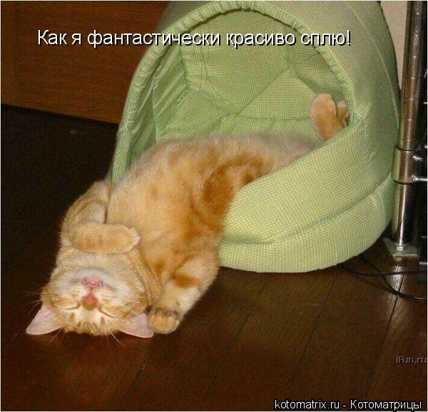 Котоматрица: Как я фантастически красиво сплю!