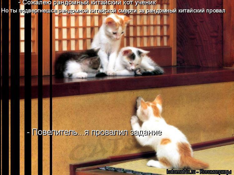 Котоматрица: - Повелитель...я провалил задание - Сожалею рандомный китайский кот ученик Но ты подвергнешся рандомной китайской смерти за рандомный китай