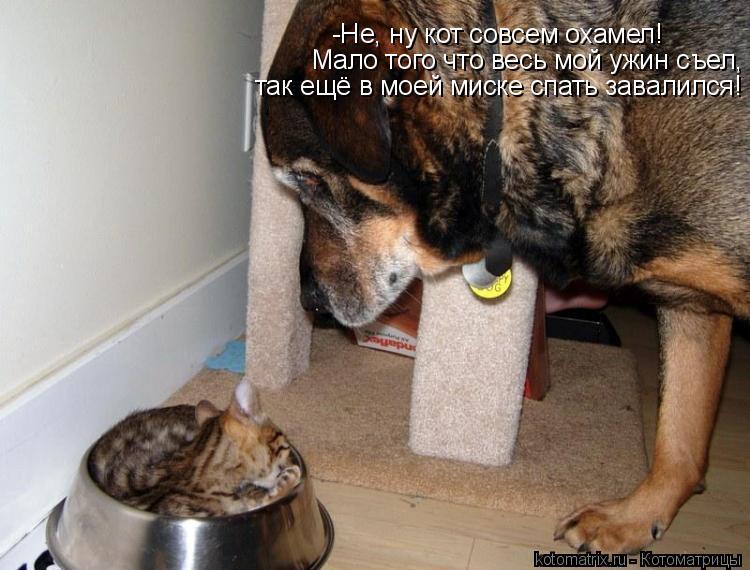 Котоматрица: -Не, ну кот совсем охамел! Мало того что весь мой ужин съел, так ещё в моей миске спать завалился!