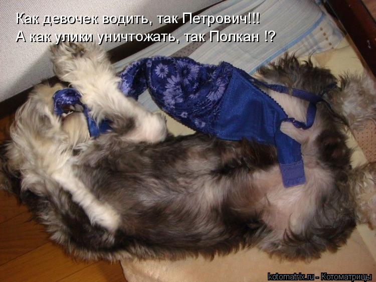 Котоматрица: Как девочек водить, так Петрович!!! А как улики уничтожать, так Полкан !?
