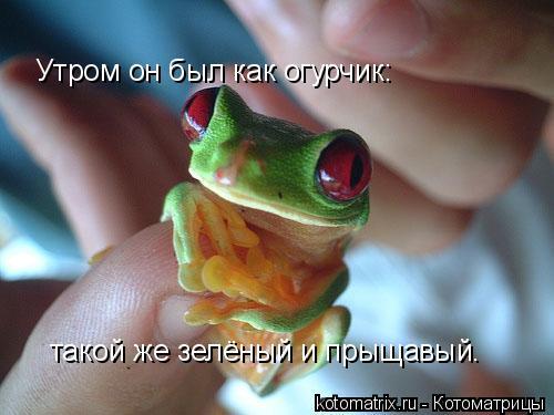 Котоматрица: Утром он был как огурчик:  такой же зелёный и прыщавый.