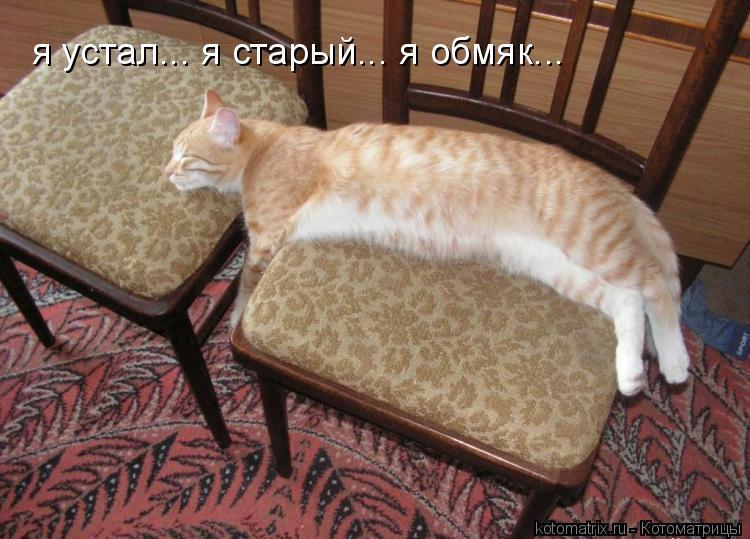 Котоматрица: я устал... я старый... я обмяк...