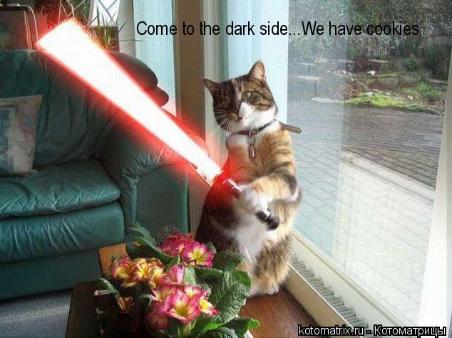 Котоматрица: Come to the dark side...We have cookies