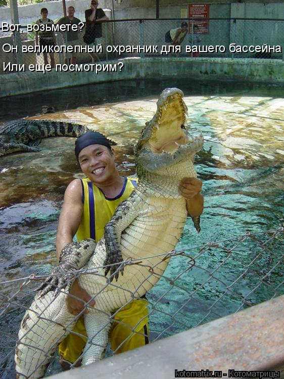 Котоматрица: Вот, возьмете? Он великолепный охранник для вашего бассейна Или еще посмотрим?