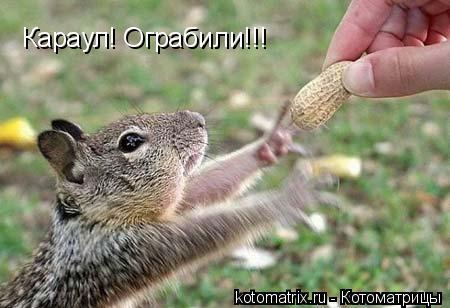 Котоматрица: Караул! Ограбили!!!