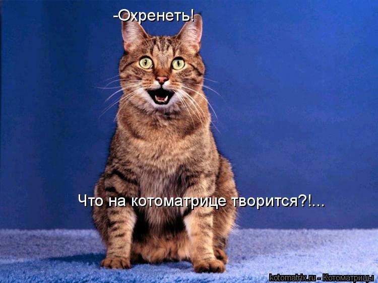 Котоматрица: -Охренеть! Что на котоматрице творится?!...